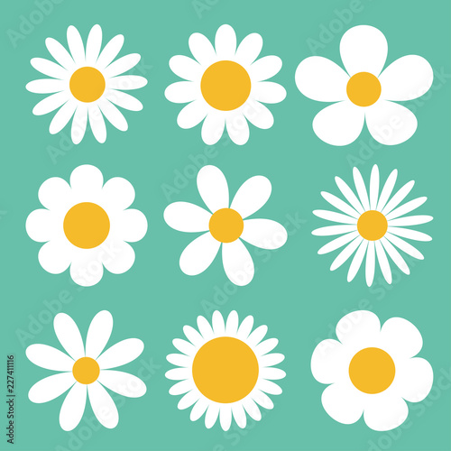 Camomile set Wallpaper Mural