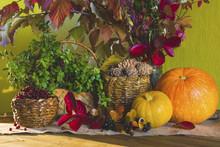 Autumn Harvest, Pumpkin, Pine Nuts