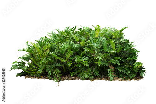 Tropical plant bush tree isolated include clipping path