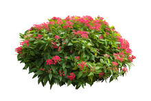 Flower Plant Bush Tree Isolated With On White Background Clipping Path