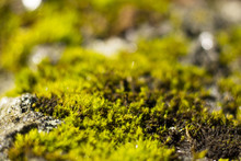 Just Moss On Stone