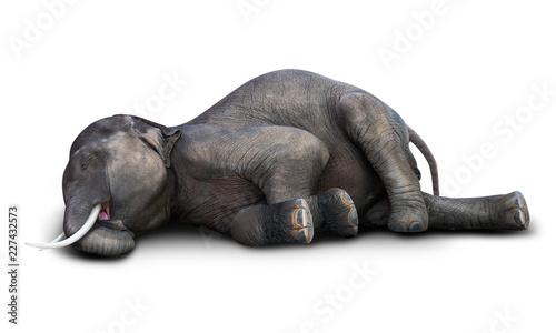 Photo  Dead elephant isolated