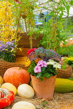 Seasonal Farmers Market Goods Display. Colorful Pumpkin For Autumn Holiday Decorations At The Agriculture Fair. Harvest Concept.