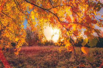 Fototapeta Inspiracje na jesień Autumn colors from Sotkamo, Finland.