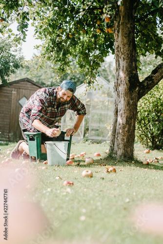 Fotografía  Gärtner sammelt Äpfel