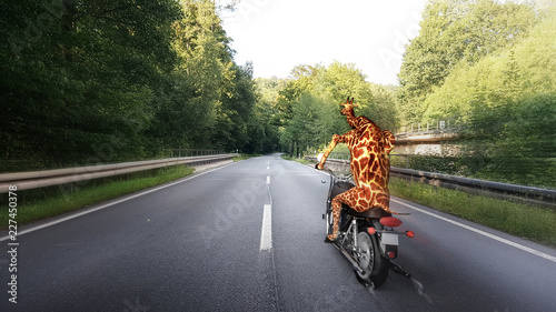 Giraffe fährt mit Motorrad auf Landstraße