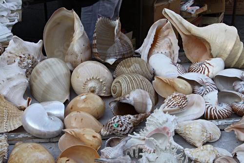 Caracolas marinas variadas.