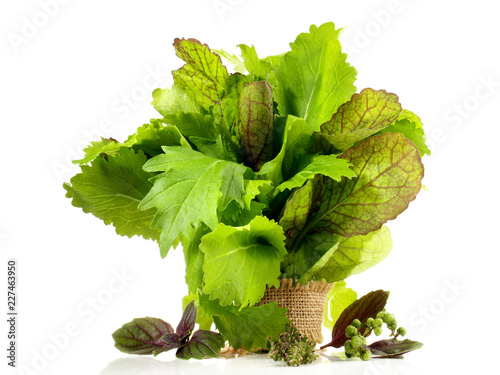 Junger Blattsalat mit Kräuter