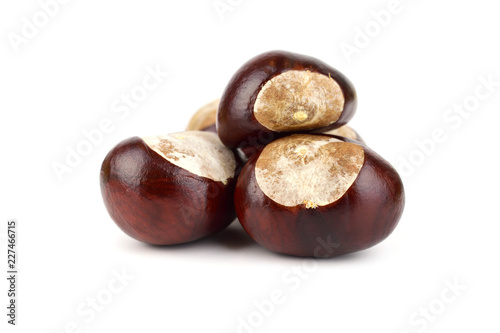 Photo Isolated Horsechestnut Aesculus Hippocastanum Seed