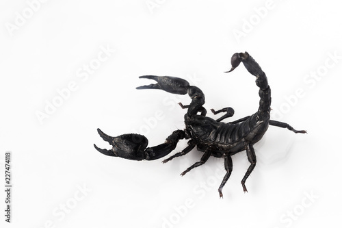 Scorpion isolated on white