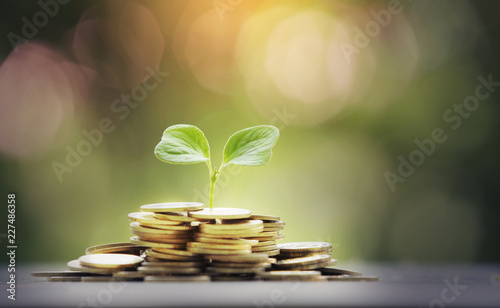 Fototapeta small tree with gold coin,business concept obraz