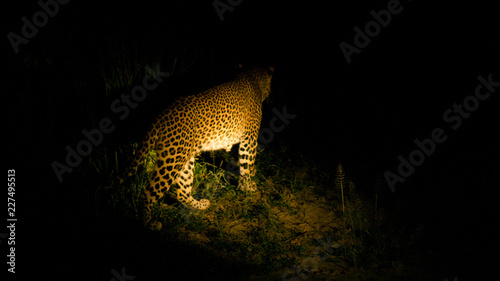Tuinposter Luipaard Leopard in night