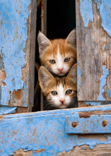Curious Kittens Peering Out Of...