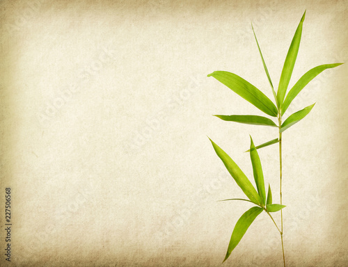 bamboo on old grunge paper texture background