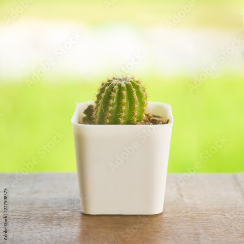 Foto op Plexiglas Cactus cactus in a pot on wooden balcony with green nature background