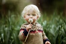 Portrait Of Boy Holding Dandelion In Field