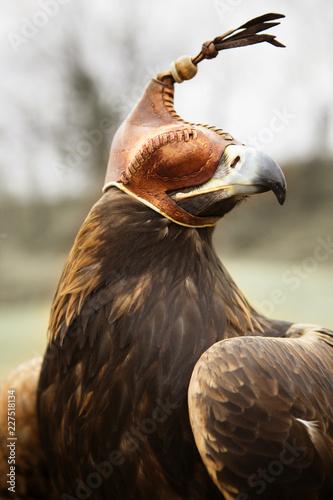 Keuken foto achterwand Vogel Close-up of bird in hood