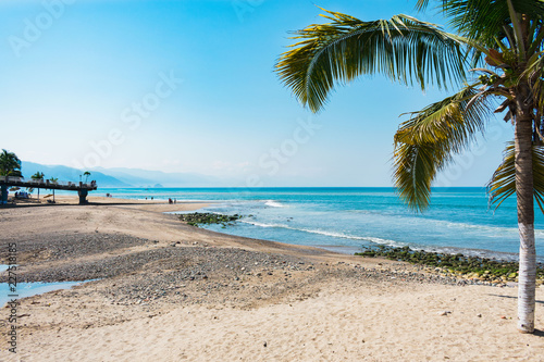 Serene beach with palm tree during day