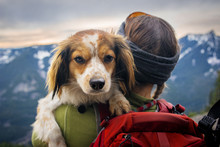 Woman Holding Dog In Mountains