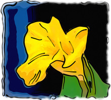 Stylized Canna Lily
