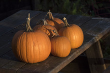 Pumpkins On Picnic Table