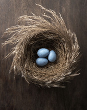 Blue Eggs In Nest On Table