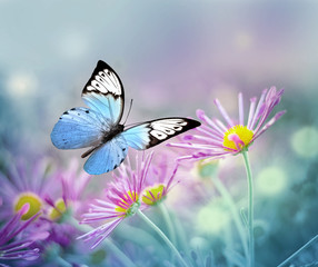 Panel Szklany Zwierzęta Beautiful blue butterfly and pink flowers. Summer and spring background