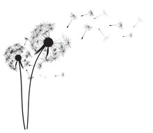Abstract Dandelion Background ...