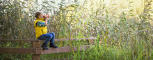Little Boy With Binoculars Sitting On A Wooden Fence In The Reeds
