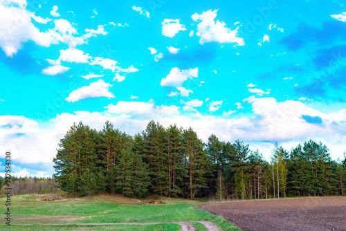 Spoed Foto op Canvas Turkoois Pine forest and field