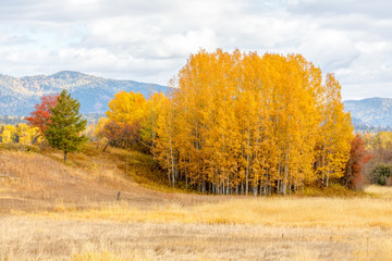 Panel Szklany Drzewa Autumn trees in brilliant color in rural countryside in northwestern Montana