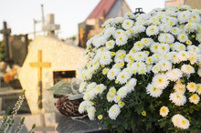 White Blooming Chrysanthemum Blooming In The Cementary With Croses In The Background