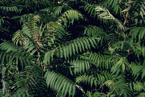 Fotografie, Obraz  zielone liście krzewu