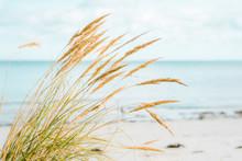 Seaside Beach In Autumn. Tranq...