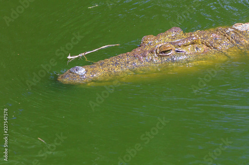 Foto op Aluminium Krokodil Closeup of African Crocodile face in the water in Ezemvelo KZN Wildlife. Nile Crocodile in St Lucia Estuary within iSimangaliso Wetland Park, South Africa, one of the top Safari Tour destinations.