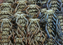 Blue Crab For Sell In Market