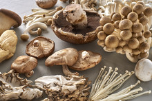 Wholesome Collection Of Gourmet Mushrooms