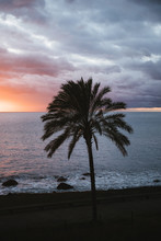 Silhouette Of A Palm Tree At T...
