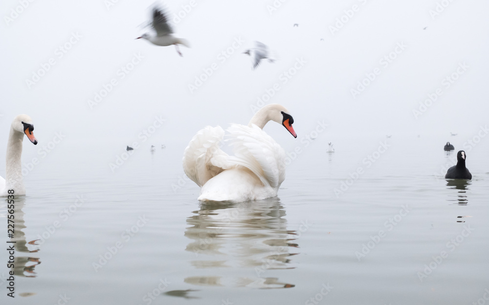 Spent some time with swans during winter