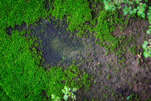 Green Moss On Grunge Concrete Brick
