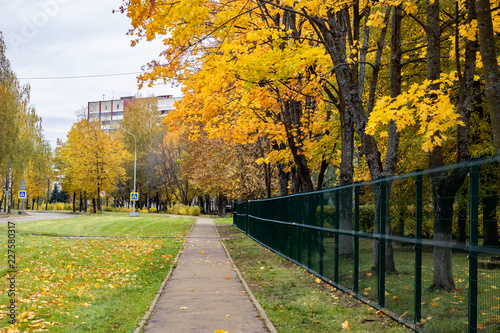 Foto op Canvas Herfst Alley with autumn trees and yellow leaves