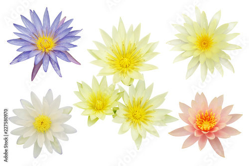 Door stickers Water lilies Lotus, Water Lily Flowers Isolated on White Background
