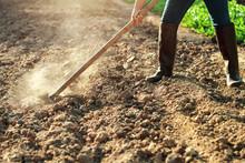 Farmer Dig Soil For Planting Vegetable In Garden