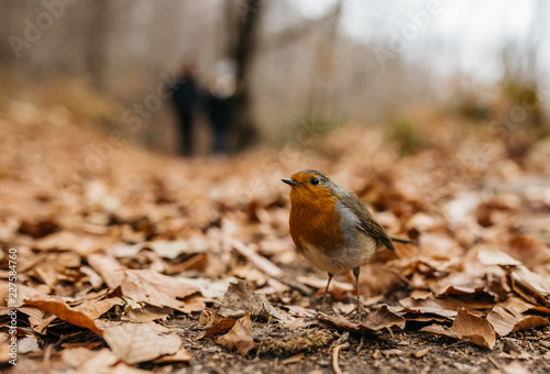 Colorful small bird on autumnal leaves