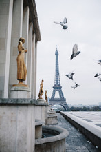 Eiffel Tower And Flying Pigeons