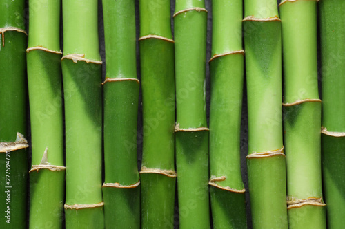 Green bamboo stems as background, top view