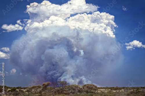 Poster Oceanië Western Australia – bush fire at the outback desert at Nullarbor Plain with high clouds of smoke and cumulus