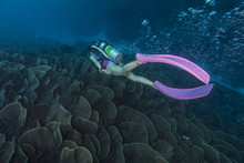 A Young Female Diver Moving On The Cabbage Coral Reef