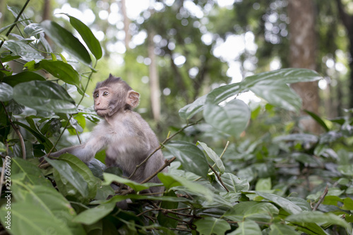 Adorable little baby monkey sitting on a tree top