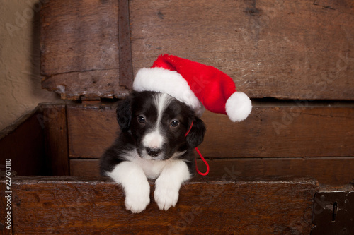 Canvas Hello puppy with christmas